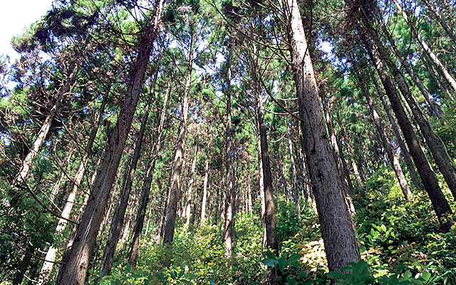 Links Forest Stewardship Council